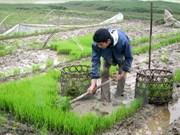 Agriculture promotes Hung Yen's socio-economic development