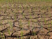 More severe drought forecast this year in Vietnam