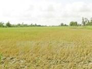 Kien Giang: various ways to combat drought, saltwater intrusion