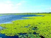 U Minh Thuong becomes Vietnam's 8th Ramsar site