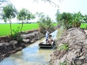 Locals join hands to fight against saline intrusion