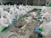 Shrimp exports to China earn 64.8 million USD in two months
