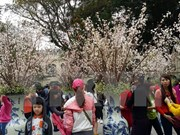 Japanese cherry blossom, investors to come to Dong Nai