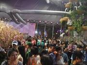 Cherry blossom festival kicks off in HCM City
