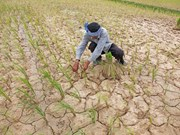 Cambodia intensifies measures to combat drought