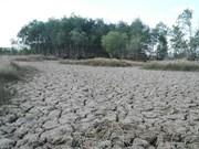 Drought-hit Ben Tre bears no festival fruit