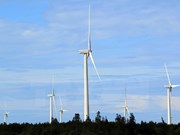 Renewable energy development needs support policy