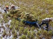 Rain, wind batter Mekong farms
