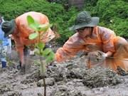 Soc Trang beefs up mangrove afforestation