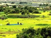 Expansion of U Minh Ha National Park gets approval