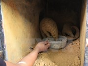 Twenty-two Sunda pangolins rescued in Ninh Binh