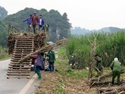 Sweet outlook for Vietnam's sugar stocks