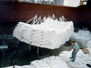 Pilot bidding set for sugar imports