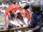 All catfish exports to US subject to examination