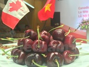 Canadian cherry introduced in Ho Chi Minh City
