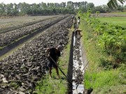 Fewer Mekong fields used for cash crops