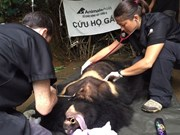 Moon bear rescued in Lam Dong province