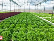 Hi-tech agriculture project developed in Thua Thien-Hue
