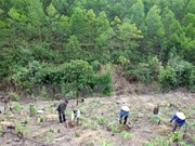 Monitoring system to aid forest management