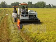 Mekong Delta farmers expand rice growing area