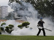 Singapore reports drop in new Zika infections