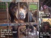 Wild sun bear, monkeys saved in Dak Lak