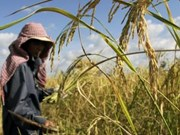 ADB approves new loan to help Cambodia develop agriculture