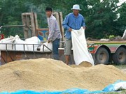 Thailand suspends rice auctions