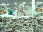 VASEP to sue US over unreasonable anti-dumping tariff on shrimp