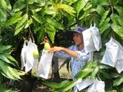 Australia opens door to fresh Vietnamese mango