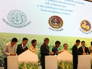 Thailand to set up rice megafarms