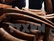 Criminal proceedings launched on elephant tusk smuggling case