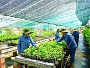 Vietnam needs safe herbal products