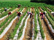 EU promotes trade on farm products, food with Vietnam