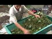 [Video] Solutions sought for sustainable pepper cultivation
