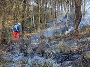 Fires ravage over 2,400 ha of forest in 2016