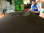 Prices of Vietnam's black pepper drop