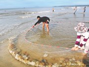 Clam fishing on Thua Duc beach