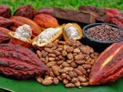 Vietnam hungry for bigger bite of cocoa market