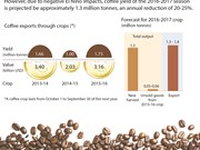 2016-2017 coffee crop expects a fall in ouput