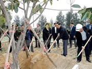 Localities launch tree planting festival