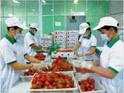 Vietnamese fruits gradually conquer foreign markets