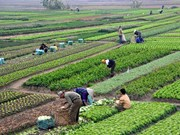 Responsive activities to climate change in agriculture