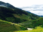 Rice terraces stun visitors to northern mountainous region