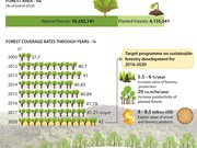 Vietnam strives to raise forest coverage to 42 percent