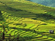 Mu Cang Chai named as worthy visit by US travel site