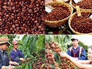 Urgent solutions needed to boost coffee's sector