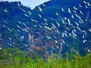 """""""Stork island"""" in Gia Lac, Ninh Binh"""