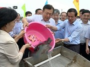 Vietnam, China release young fish into Tonkin Gulf