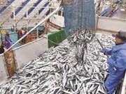Ninh Thuan fishing sector celebrate bumper harvest